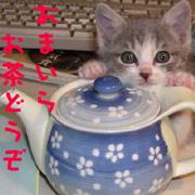 http://soutokufu.s145.xrea.com/catshit1/dreamtale.jpg