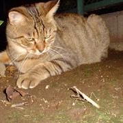 http://soutokufu.s145.xrea.com/catshit1/insectmania.jpg