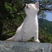 http://soutokufu.s145.xrea.com/catshit1/jion888.jpg