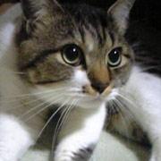 http://soutokufu.s145.xrea.com/catshit1/mits.jpg