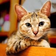 http://soutokufu.s145.xrea.com/catshit1/peachboy.jpg