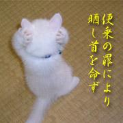 http://soutokufu.s145.xrea.com/catshit1/tko.jpg