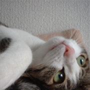 http://soutokufu.s145.xrea.com/catshit1/yeppun_i.jpg